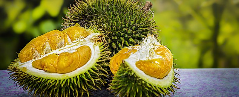 durian 3597242 1920